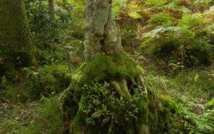 Loch Lommond tree, copyright Nancy Noll Kolinski